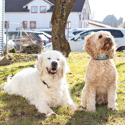 Hunde Sicherheitsdienst